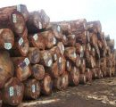 Gambia suspends transport, import and export of timber