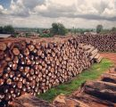 Myanmar teak logs prices see impressive rise as EU regulations strengthen