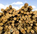 Lithuanian roundwood prices recover, but still at a low level