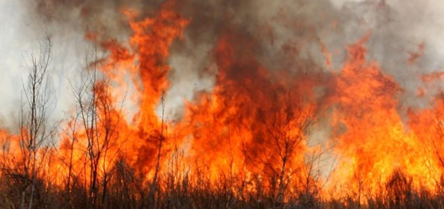 Forest fires in Chile will cost the government $333 million