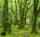 EIB announces multi-million backing for new investments in Irish forestry