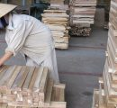 Vietnam concerned about timber shortage as China closes natural forests