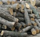 France: Oak sawlog prices continuously on the rise
