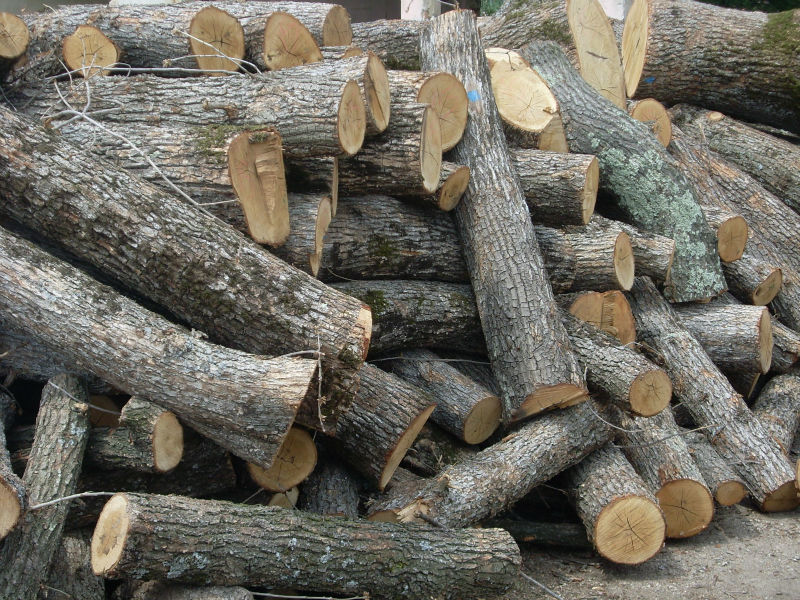 Oak Wood Logs ~ France oak sawlog prices continuously on the rise