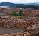 British Columbia log exports to Asia reach record levels