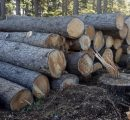 Planting restrictions in South Africa lead to timber shortage