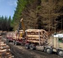 Record roundwood prices in New Zealand during February
