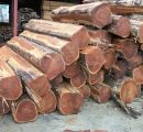 Ghana's exported wood products prices in October