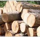 UK's imports of timber products increased by 18% during Jan.-Feb. 2017