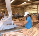 Vietnam's wood exports reach 17.1% increase during Q1/2017