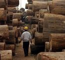 Global demand for African tropical timber decreasing