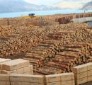 Russia dominates China's sawn softwood imports