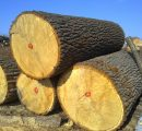 Iran's government encourages wood imports due to wood shortage