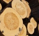 Finnish roundwood prices keep up in March
