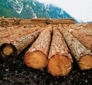 US duties lead Canada to drive wood exports to China