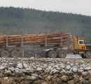 New Zealand log prices highest in 20 years