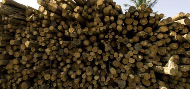 Brazilian roundwood exports hit record high