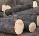 EU hardwood logs exports to China more than triple in the first quarter of the year