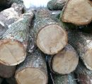 Protests in Europe against oak exports