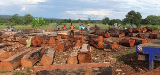 Zambia expands ban on timber exports to all species
