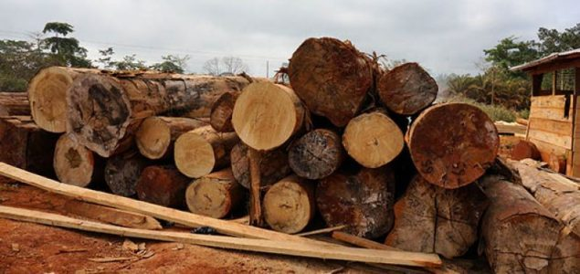 Timber exports from Ghana dropping sharply this year