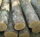 EOS general assembly talks about Croatia's oak logs export ban