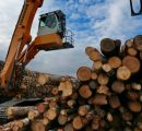Kazahstan partially bans exports of timber