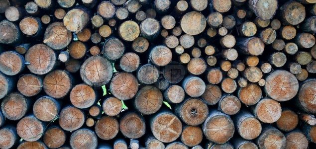 Finnish roundwood prices on an upward trend in July