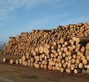 Global sawlog prices reach highest level in 4 years