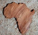 Central/West Africa: Hints of softening prices for some timbers