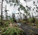 Huge storms ravage Italian forests; almost 15 million m3 damages