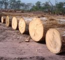 African countries commit to fight against illegal timber trade