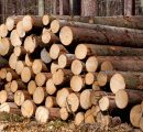Trade of logs in Finland falls by 50% in January-February; prices on the rise