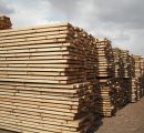 Chinese company to build huge sawmill complex in Russia