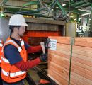 Interfor to rise lumber production by 50% at Meldrim mill