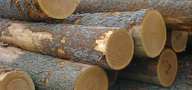 Steady increase for the US red oak exports