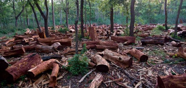 Over 1.4 million logs where illegally traded from Nigeria to China, EIA says