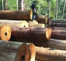 Romania: Timber market needs to boost competition