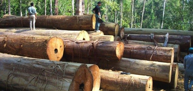 Romania: Romsilva to harvest 9.5 million m3 of roundwood in 2020
