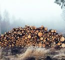 Estonia: Growth in roundwood prices consolidates in September