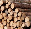 Estonian roundwood prices way lower compared to last year