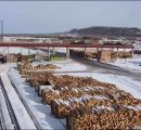 Russia might limit the exports of roundwood