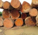 Central/West Africa: Buyers reject the higher asking prices for logs