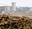 Timber export prices in Japan likely to hit 40-year high on Chinese demand
