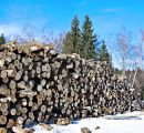 Roundwood prices in Russia fall sharply in February 2020