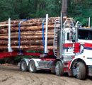 New Zealand log prices set new record on booming Chinese demand