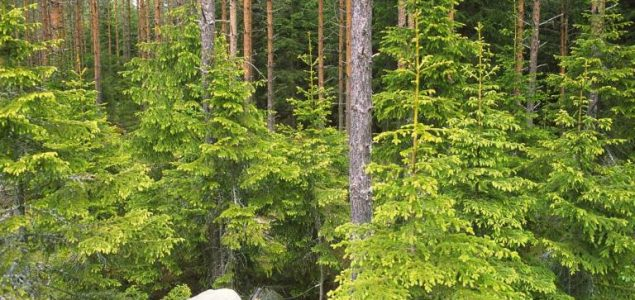Sweden forests with 120 million m3 more hardwoods than 25 years ago