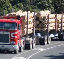New Zealand softwood log exports reach new records for 2017
