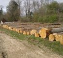 Croatia's ban on oak lumber transport lifted
