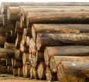 Nigeria rosewood crisis gets new control measures from CITES